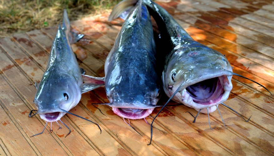 Tips on Fishing Man Made Ponds for Catfish