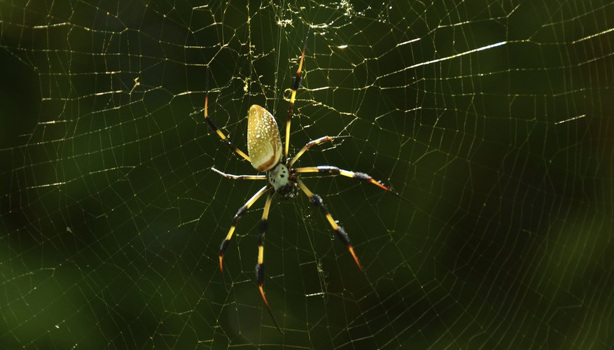 Missippi is home to a wide variety of spiders.