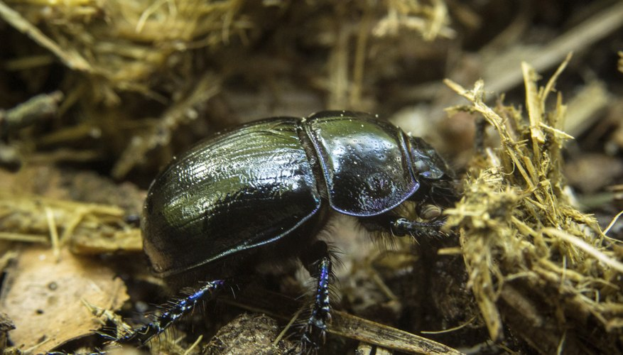 Dung beetles benefit from nutrients shed by other animals.