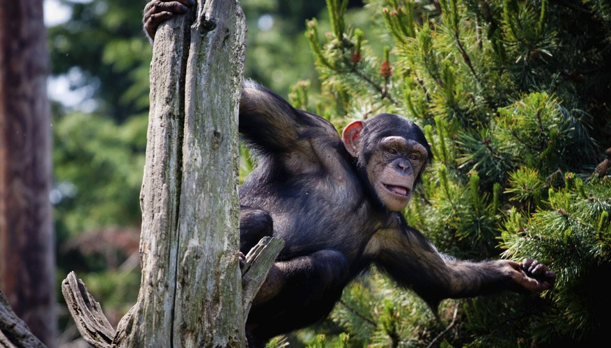 Animals That Live in the Tropical Forest That Are ...