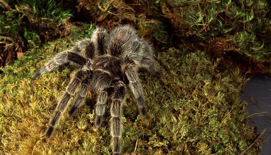 Jamies tarantulas coupon code