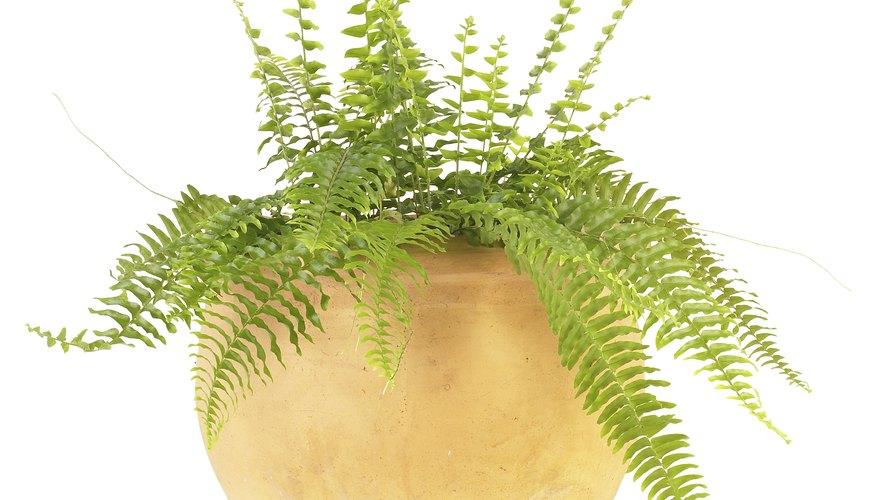 El sulfato de amonio se utiliza más comúnmente como fertilizante para plantas.