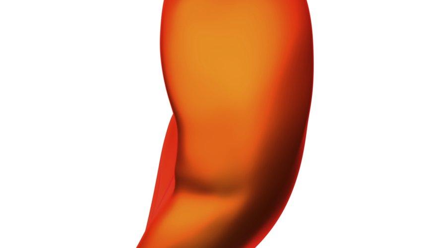 Human spleen isolated.
