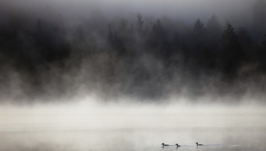 Steam fog can form over water on particularly cold days.