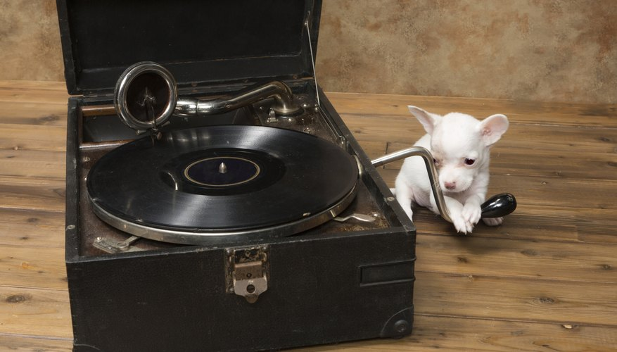 A puppy placing his paw on the handle of an antique phonograph.