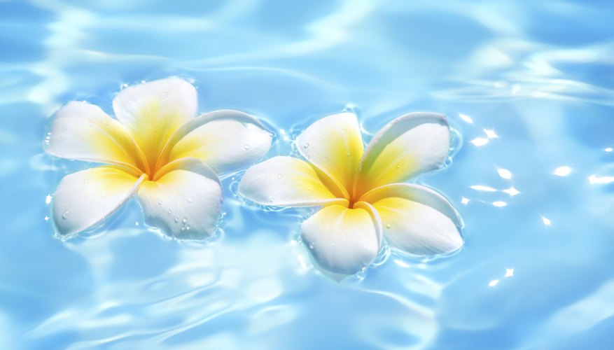Two flowers floating on water.
