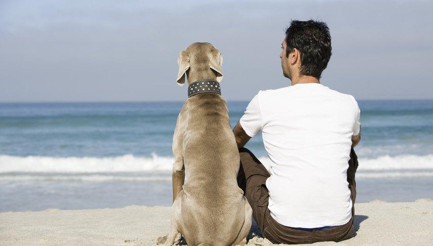 → Anatomía del oído canino | Geniolandia