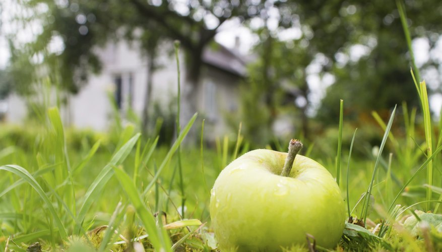 An apple in the grass near a house.