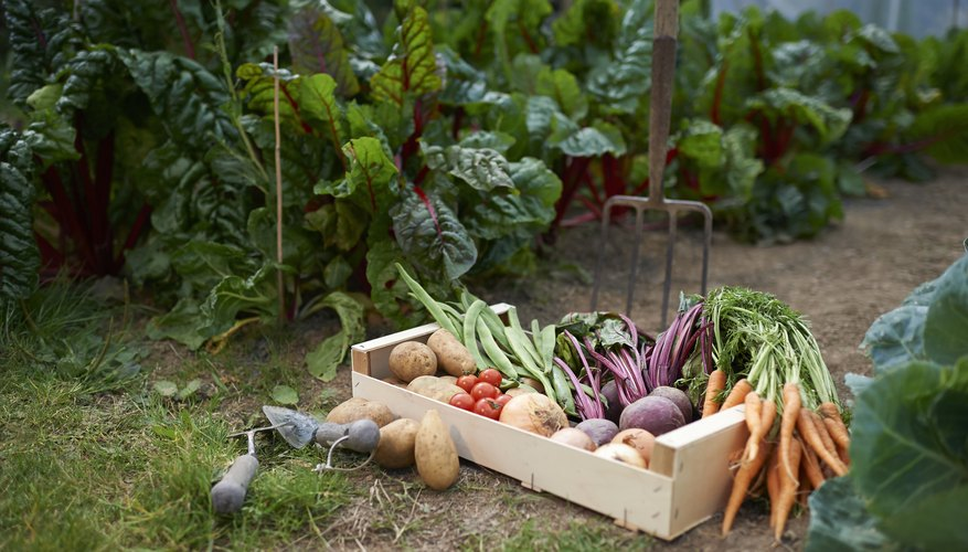 6 Creative Vegetable Garden Ideas