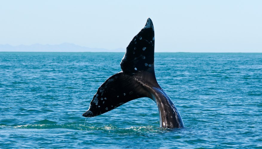 Tips for the Best Whale Watching in Boston