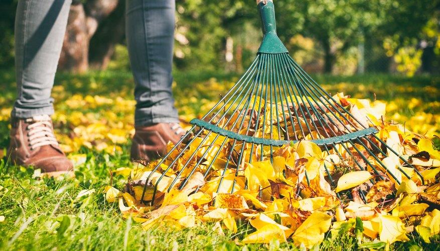 Gardener woman raking up autumn leaves in garden. Woman standing with rake.