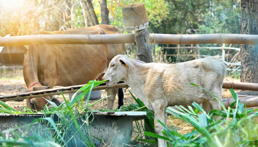 Cattle Diseases That Cause Weight Loss