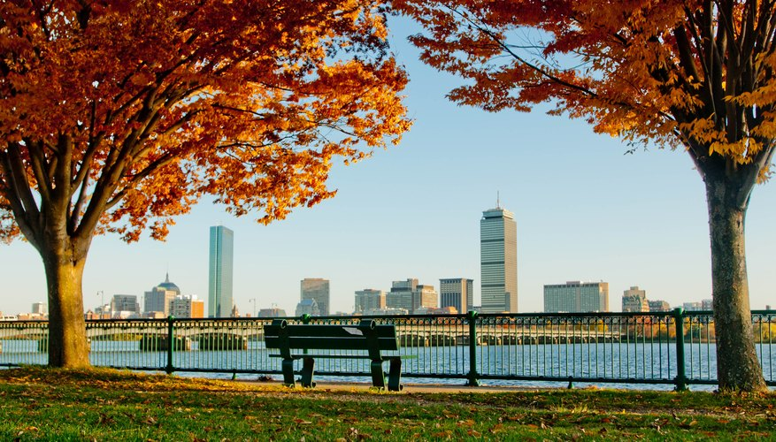 Everything You Need to Know About Boston