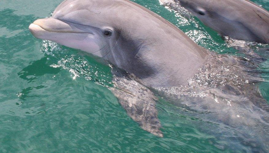 How Do Dolphins Nurse