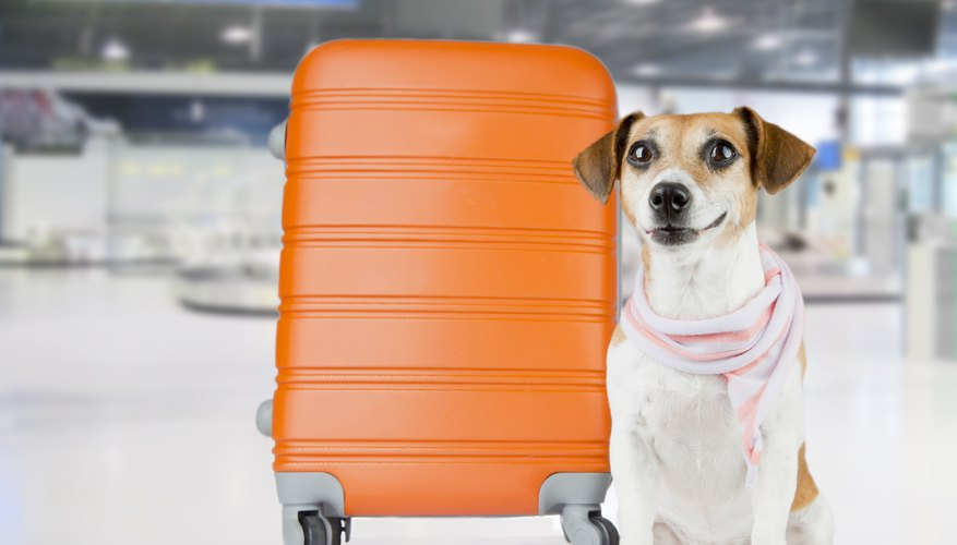 How Much Does It Cost to Fly a Dog?