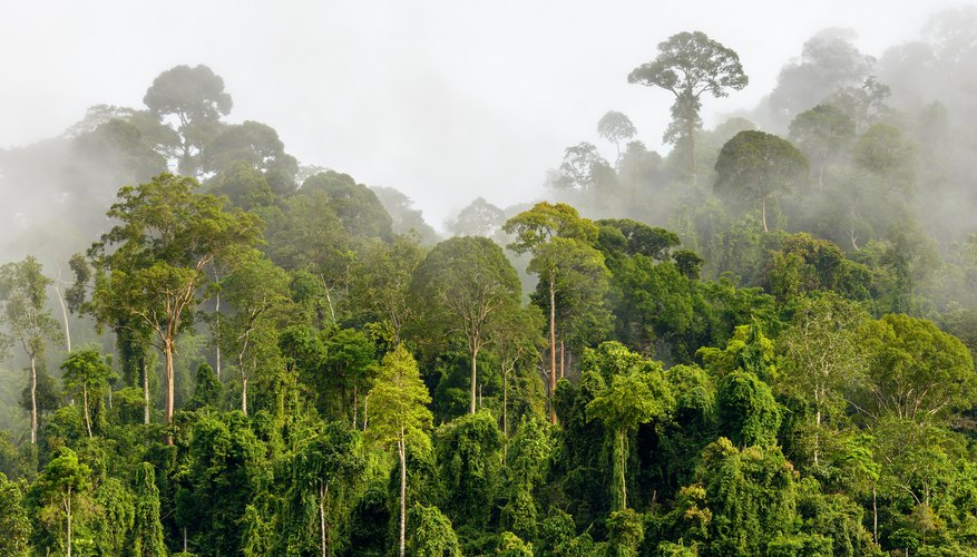 what is the average rainfall in a rainforest sciencing