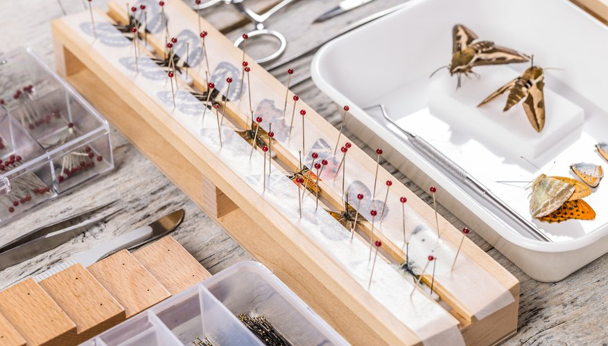 How To Preserve A Dead Butterfly Sciencing