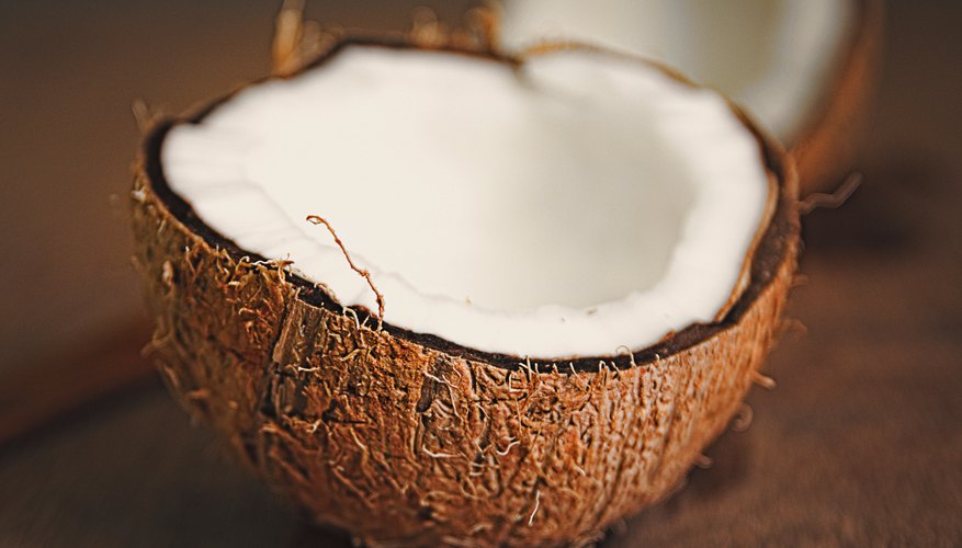 What Are the Adaptations of a Coconut Seed