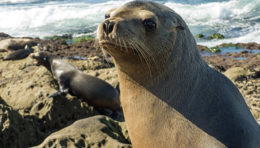 Where to See Seals in San Diego