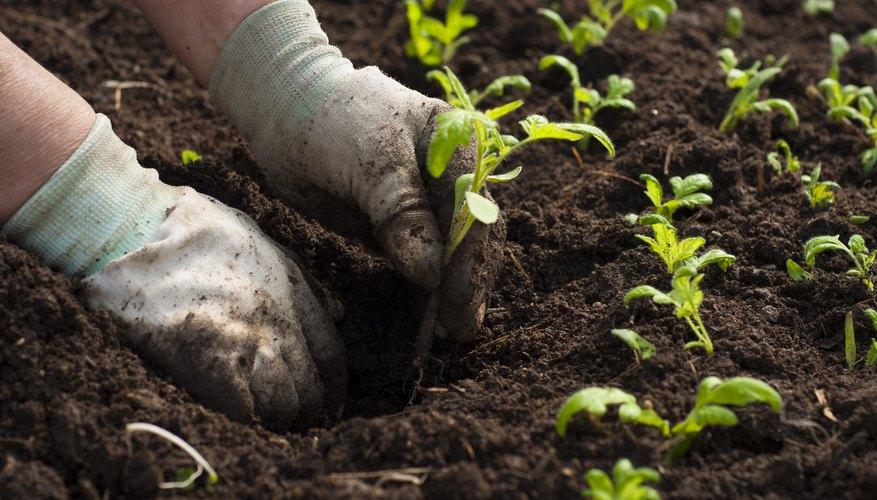 Nature S Way Gardening