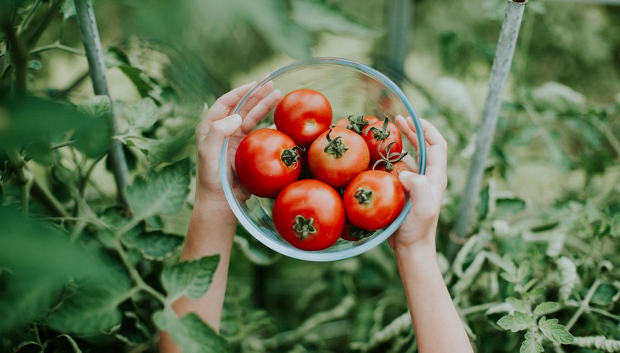 It's Tomato Time: 6 Tomato Plants for Your Garden