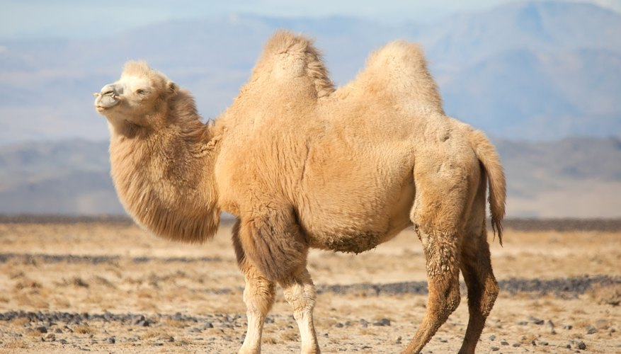 Cold Desert Plants and Animals  Sciencing