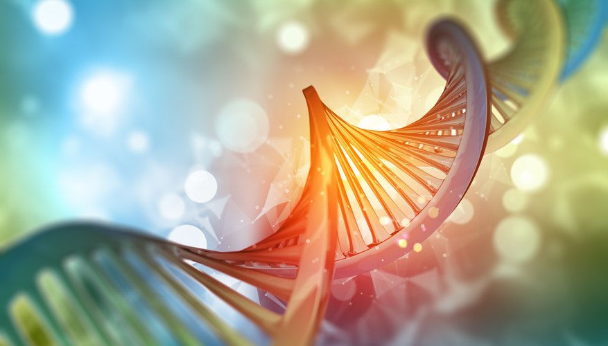 The importance of dna in the human cell sciencing the recognition that dna carries the information blueprint for all living organisms and the mechanisms that translate the dna code into the stuff of life malvernweather Images