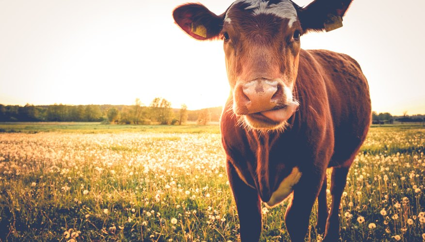 The best-known illness that prions cause is mad cow disease.