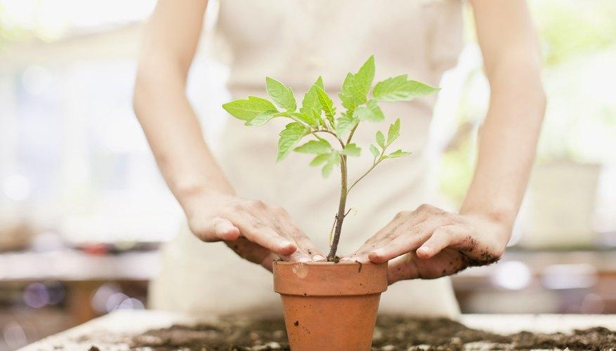 C mo vender plantas de vivero como un emprendimiento for Como establecer un vivero