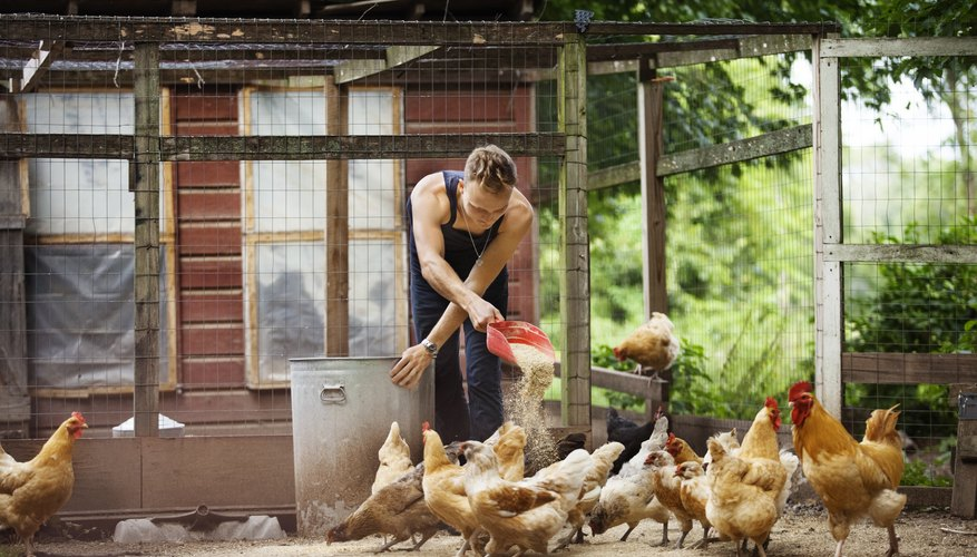 free range chicken farming business plan