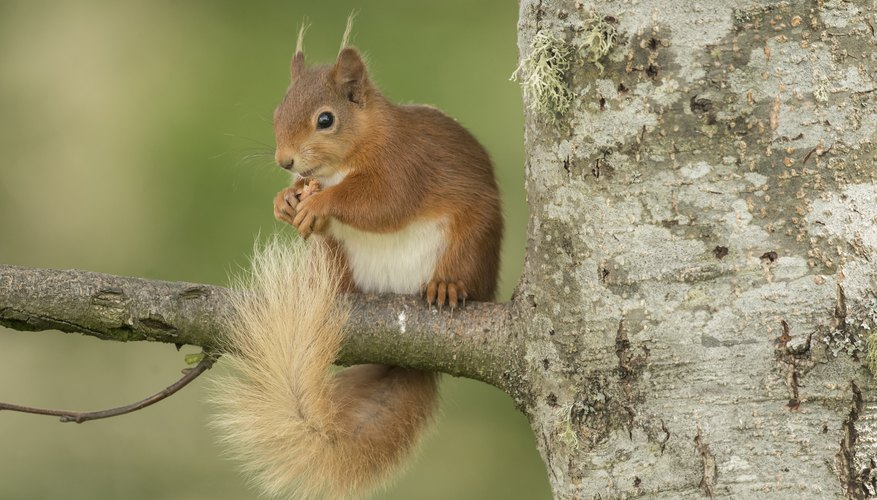 Why Do Squirrels Squawk in Trees?