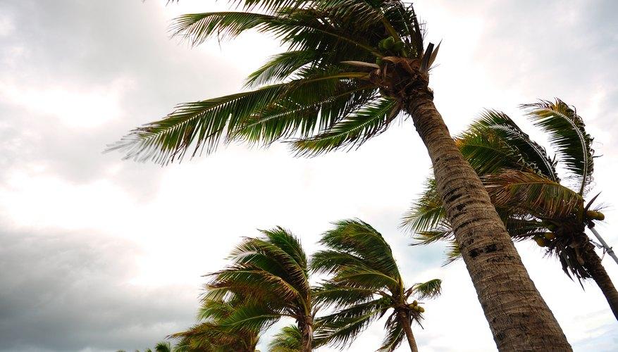 The Characteristics of a Hurricane