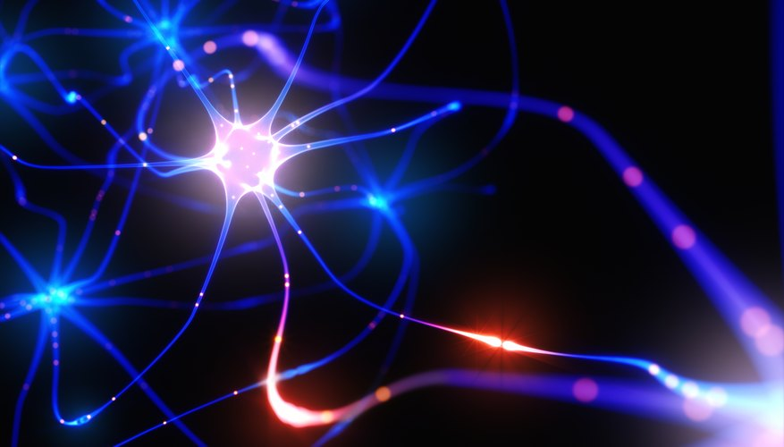 What is the electrical impulse that moves down an axon sciencing the human brain has approximately 100 billion nerve cells nerve cells are also found in the spinal cord together the brain and spinal cord make up the ccuart Choice Image