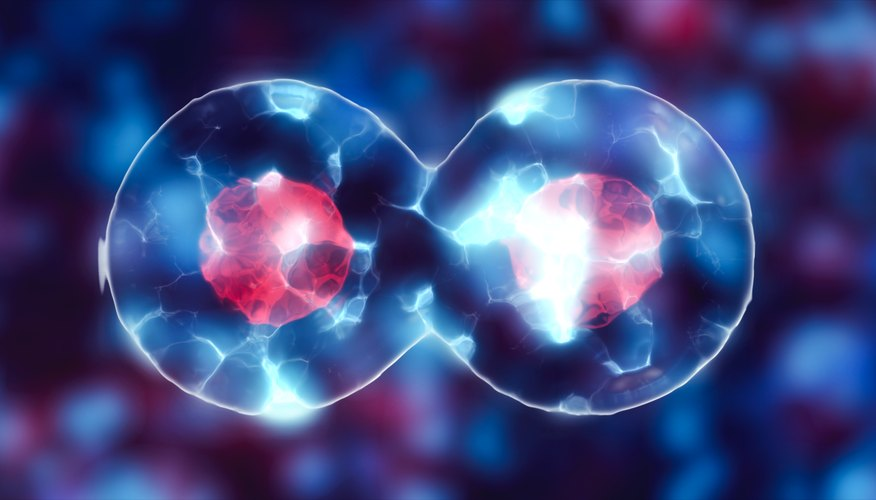 Three Reasons Why Cell Division Is Important Sciencing