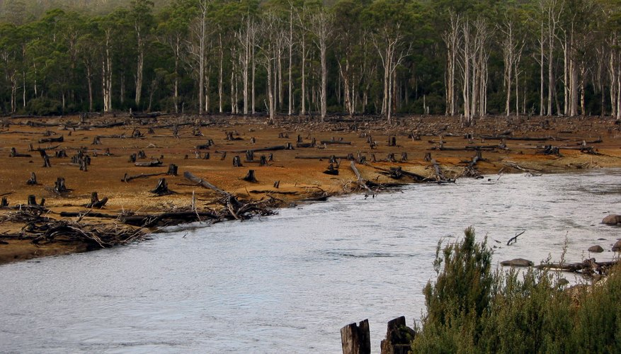 The History of Deforestation