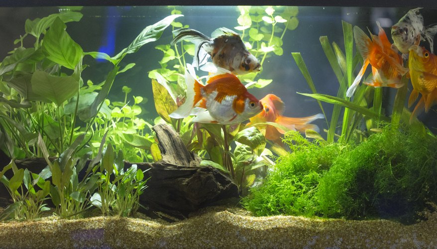 How to raise the alkalinity in a freshwater aquarium for How to raise ph in fish tank
