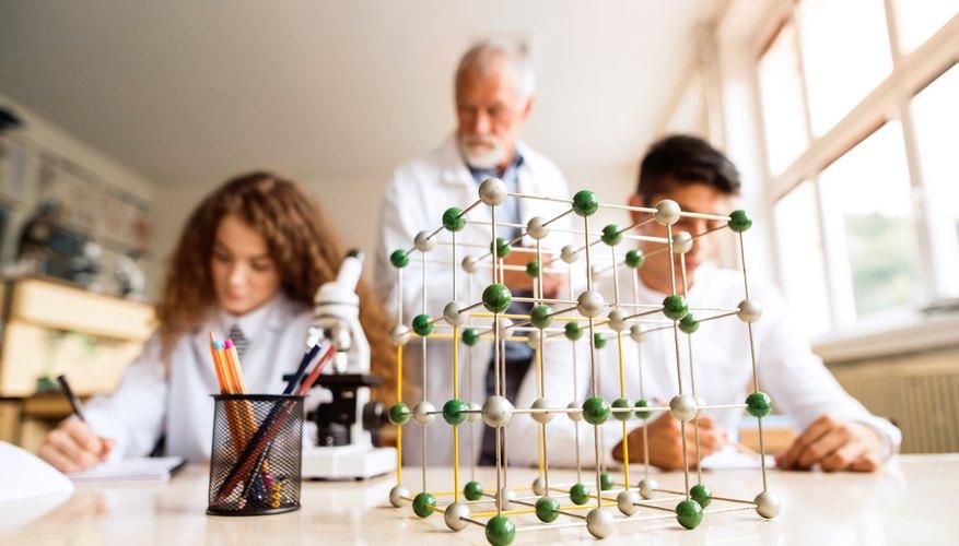 Was sind die Organisationsebenen in der Biologie ...