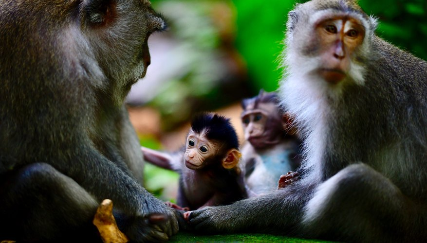 Scientists have found a way to control neural activity in monkeys using artificial intelligence.