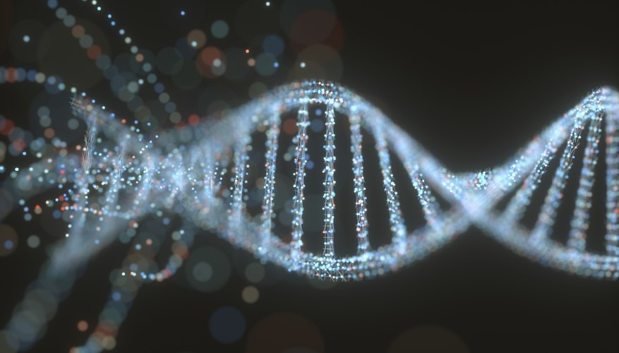 what are the four nitrogenous bases of dna sciencing