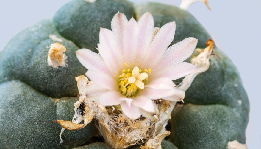 top 10 plants in the sahara desert sciencing