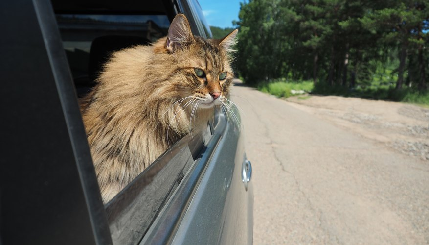 How to Plan a Successful Road Trip With my Cat