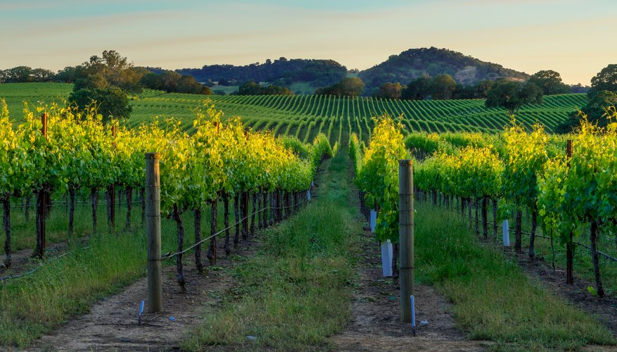 Best Time to Visit Napa