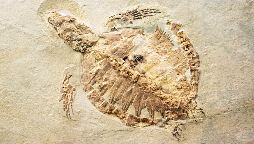 what can we learn by studying fossils sciencing