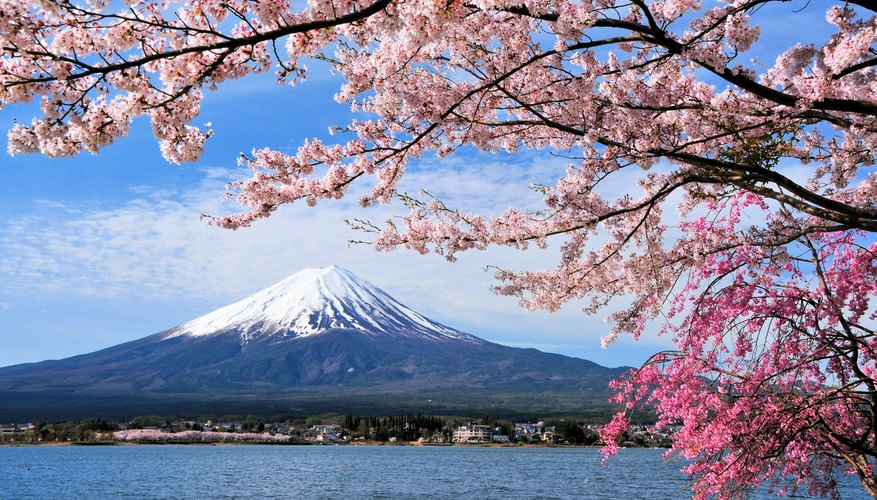 Best Time to Visit Japan