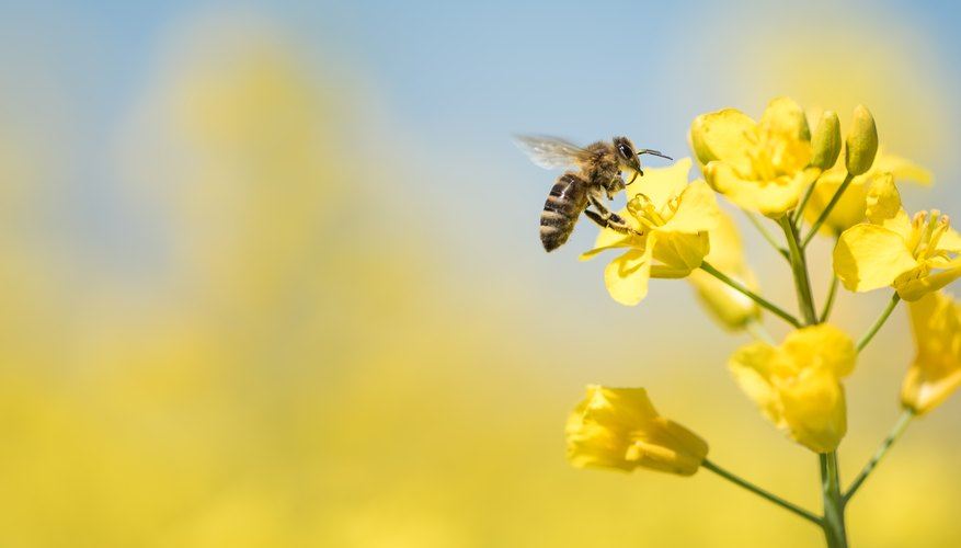 honey bees and flowers relationship help
