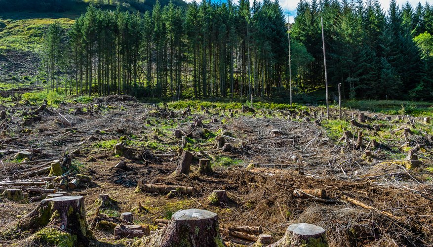 how does deforestation affect the air sciencing