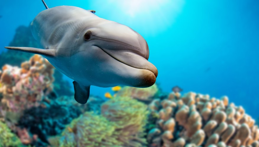 How Do Dolphins Mate