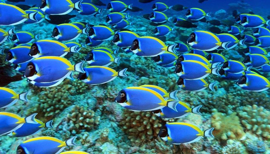 Ocean Ecosystem for Kids | Sciencing