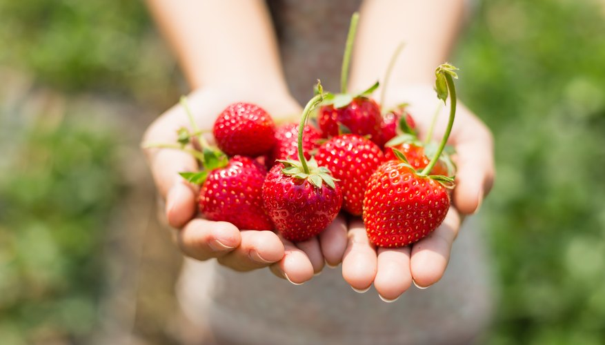 When is Strawberry Season in Florida?