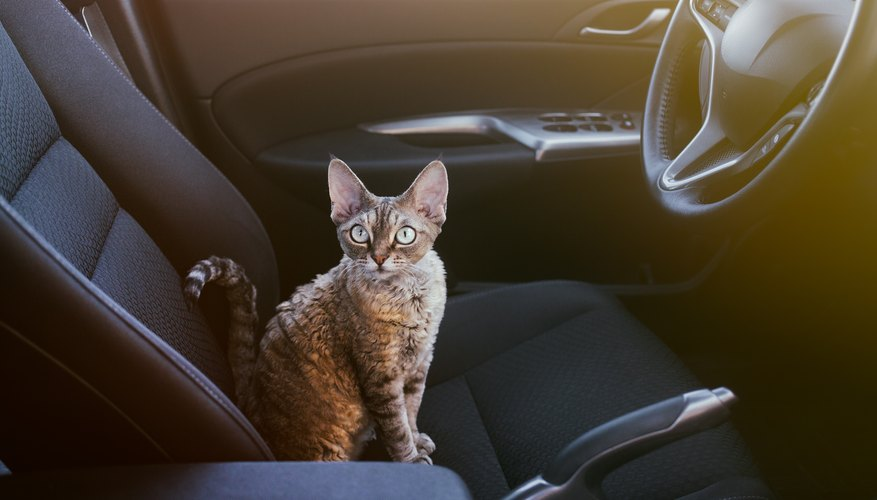 Tips for How to Travel With Your Cat in a Car for Long Distances